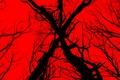 Picture cinema, red, devil, tree, movie, evil, film, witch, The Woods, Blair Witch