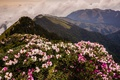 Picture spring, landscape, pink, tops, the bushes, fog, nature, clouds, forest, hills, haze, overcast, cloudy, leaves, ...
