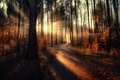 Picture forest, the sun's rays, Sunset, treatment