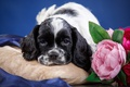 Picture puppy, muzzle, Spaniel, spotted, flowers