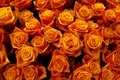 Picture buds, yellow, gold, petals, rose, roses, bright, orange, a lot, flowers