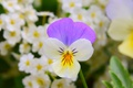 Picture Spring, Flowers, Flowers, Spring