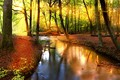 Picture autumn, forest, the sun, trees, stream