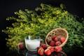 Picture background, milk, strawberry, background, strawberry, milk