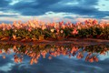 Picture field, the sky, water, flowers, nature, reflection, spring, tulips