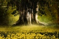 Picture glade, flowers, big tree