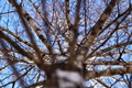 Picture the sky, branches, tree, birch, the tip