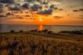Picture Hawaii, clouds, sunset, horizon, the sky, the sun, sea, coast, the bushes, Kawaihae, grass