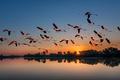 Picture sunset, pack, nature, Flamingo, flights, lake, birds