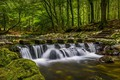 Picture forest, river, Park, Northern Ireland, waterfall