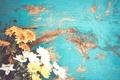 Picture flower, summer, blue, chrysanthemum, bouquet, spring, flowers, vintage