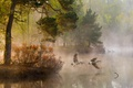 Picture forest, river, water, duck, trees, fog, nature, light, couples, morning