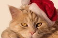 Picture cat, look, muzzle, Santa, cap, red cat