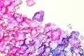 Picture background, hydrangea, petals, flowers