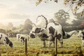 Picture art, dinosaur, Triceratops, nature, cow