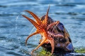 Picture sea, food, octopus, mouth, lunch, catch, sea lion