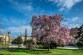 Picture Croatia, Magnolia, flowering trees, Croatia, Flowering trees, Zagreb