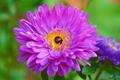Picture Macro, Purple flower, Purple background, Macro