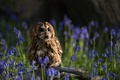 Picture birds, owl, snag, bells, bokeh, owl