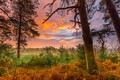 Picture autumn, forest, the sky, grass, clouds, trees, fog, dawn, glade, the bushes