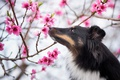 Picture garden, spring, dog