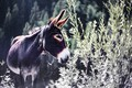 Picture nature, background, donkey