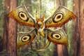 Picture Mothbat, monster, creature sketch