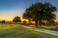 Picture Sunset, Nature, Trees, Rays Of Light, Grasslands Road