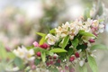 Picture branch, spring, flowering