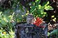 Picture animals, cottage, rodents, chipmunks, wild animals