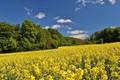 Picture Nature, Field, Trees, Nature, Field, Trees, Yellow flowers, Yellow flowers