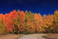 Picture USA, forest, Wyoming, autumn, leaves, Grand Teton National Park, road, trees, Grand Teton