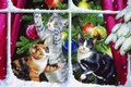 Picture snow, decoration, cats, holiday, toys, tree, branch, window, kittens, Persis Clayton Weirs