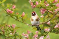Picture flowers, tree, bird, nature