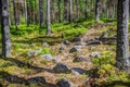 Picture forest, stones, trees, path, Finland