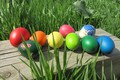 Picture eggs dyed, grass, mamala ©, spring 2018, eggs, Easter