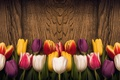 Picture love, colorful, wood, tulips, romantic, tulips, heart, spring, red, flowers