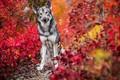 Picture dog, autumn, each