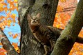 Picture Tree, Cat, Fall, Cat, Tree, Autumn, Autumn