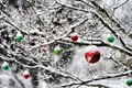 Picture Christmas, trees, decoration, garden, winter, snow, New Year, balls