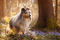 Picture flowers, dog, spring