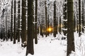 Picture winter, forest, light
