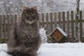 Picture winter, cat, wool