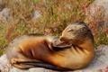 Picture nature, Ecuador, sea lion, The Galapagos Islands