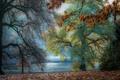Picture nature, foliage, river, branches, autumn