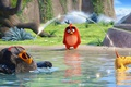 Picture cinema, film, Bomb, Angry Birds, animated film, Chuck, school, Angry Birds: The Movie, lake, movie, ...