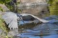 Picture bird, stones, nature, water, Heron