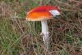 Picture grass, mushroom, mushroom