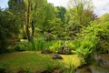 Picture stones, pond, grass, the sun, summer, greens, the bushes, trees, Park