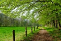 Picture Grass, Trees, Grass, Green field, Nature, Trail, Green field, Trees, Spring, Path